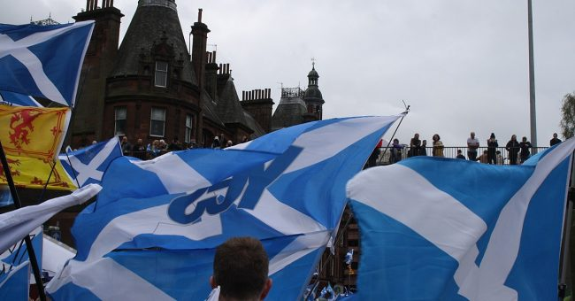 Saltires and Yes Flags